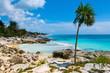 Palmenstrand in Mexiko Ort Tulum Palm beach in Tulum Mexico