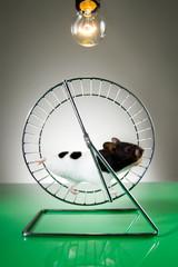 Hamster auf dem Laufrad 2