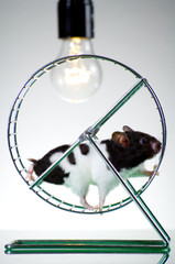 Hamster auf dem Laufrad