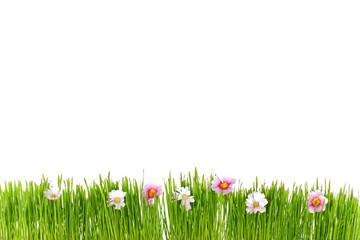 grüne Frühlingswiese mit weißen Hintergrund