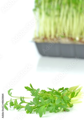 Watercress cuttings on a white background