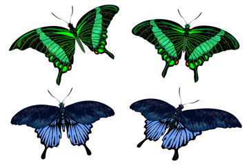 beautiful isolated green and blue butterflies