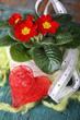 Blumendekoration mit roter Primel und Herz