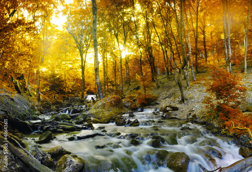 Autumn creek woods with yellow trees