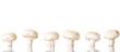Edible button mushroom, .champignon