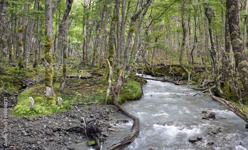 Wild Patagonian Forest, El Chalten