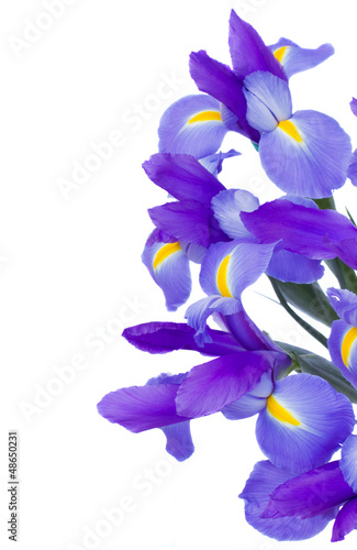 bouquet of blue  irises