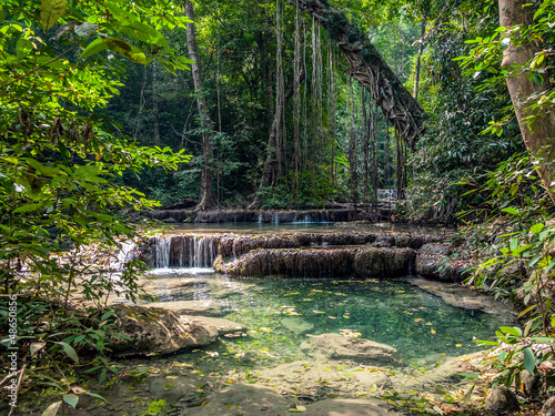 Lianas in the rainforest. Erawan National Park in Thailand