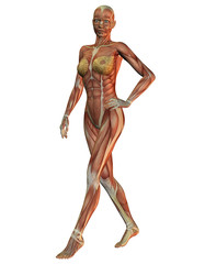 Anatomie und Muskeln der Frau beim laufen