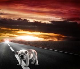 cane abbandonato sulla strada al tramonto