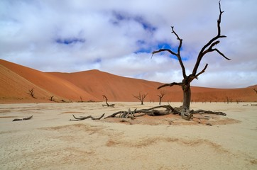 Dead tree under a rare cloudy sky in Deadvlei, Namibia