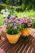 Spring flowers in pots on a garden table.