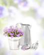 Campanula Flowers