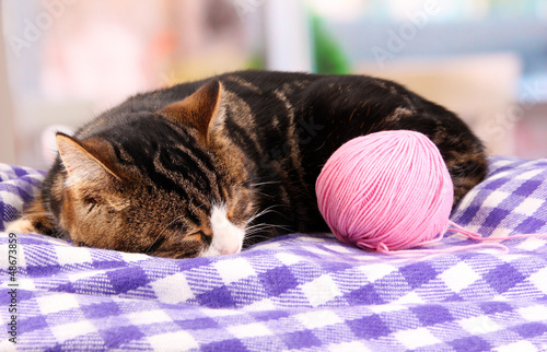 cat with threads on plaid in room