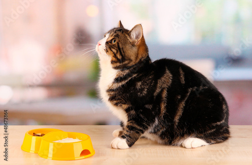 cat on table in room