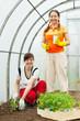 gardeners planting tomato spouts