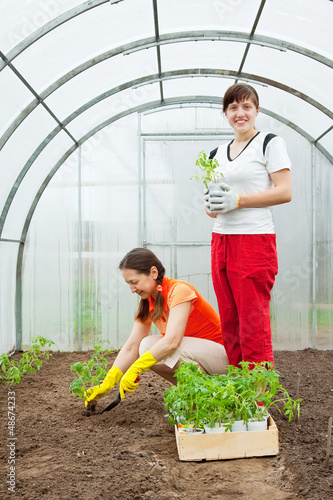 women planting  seedlings in greenhouse