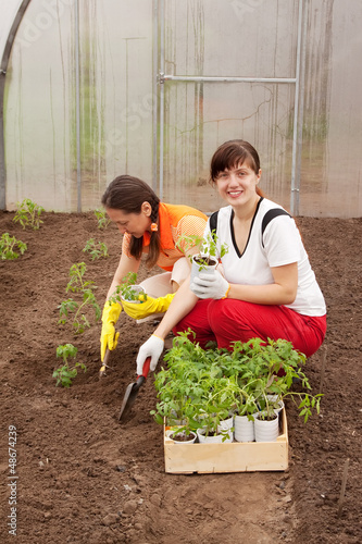 Two women planting tomato