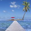 île au cocotier