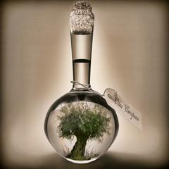 Botella con árbol de olivo