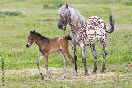 Foal with a mare