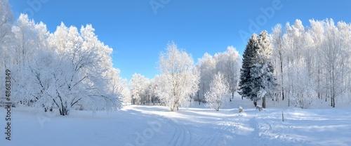 canvas print picture Winter park