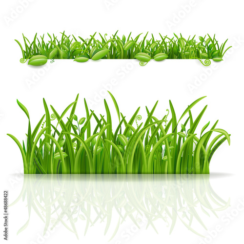 Green grass and leaf. Vector illustration