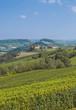 Weinlandschaft im Piemont nahe dem Weinort Asti