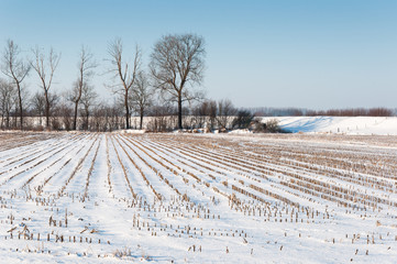 Stubble field from silage maize covered with snow
