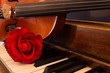 Violin, Piano, and Rose