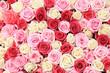 Obrazy na płótnie, fototapety, zdjęcia, fotoobrazy drukowane : White and pink roses in arrangement