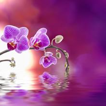 Fioletowy storczyk z odbicia w wodzie
