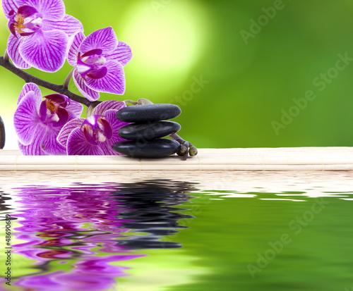 Fototapeten,blume,natur,hintergrund,orchidee
