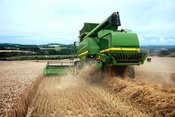 Die Weizenernte