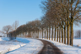 Row of bare trees besides a country road in winter