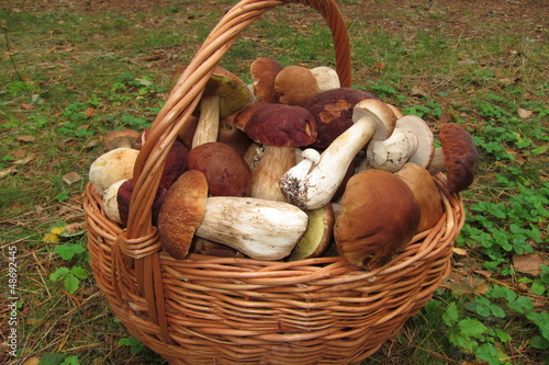 Leinwanddruck Bild Корзина грибов
