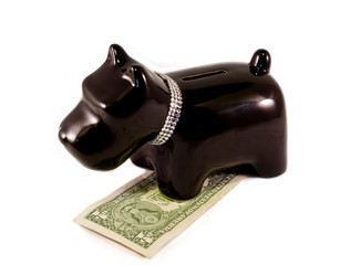 little dog moneybox