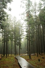 Jeolmul Nature forest lodge in Jeju Island, Korea