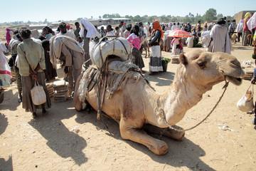 dromedario al mercato in Africa