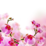 Flowers, blossom summer background with beautiful pink orchid
