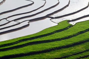 terraced rice fields with water in Mu Cang Chai, Yen Bai, Vietn