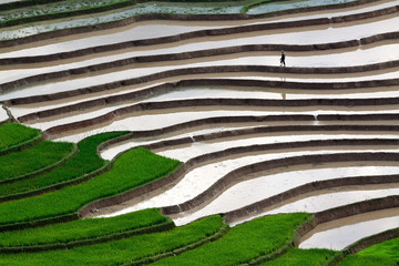 terraced rice fields with water in Mu Cang Chai, Vietnam
