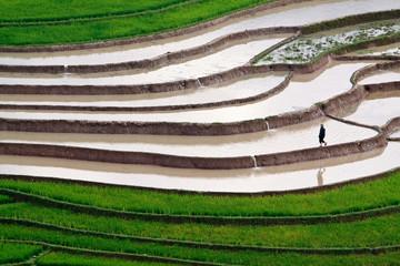 terraced rice fields with water in Mu Cang Chai, Yen Bai, Vietna
