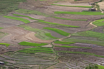 terraced rice fields with water in Mu Cang Chai, Yen Bai, Vietna