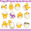 Easter eggs chicks