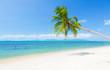 Fototapeten,palme,strand,ozean,sand