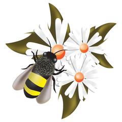 ape su fiori
