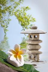 Frangipanier, lanterne zen