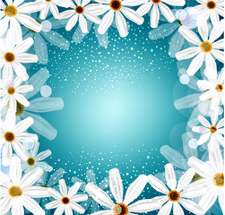 congratulation vector background with daisies
