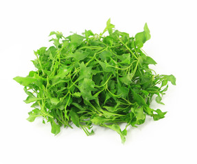 water cress on white background